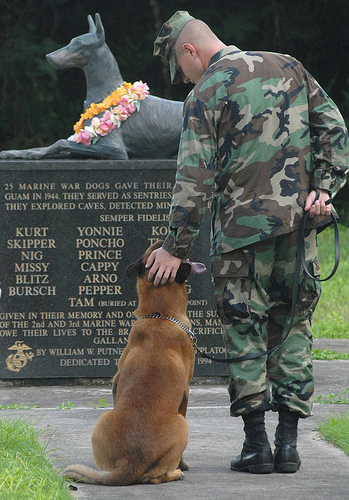 Thank you to ALL our Animal Veterans